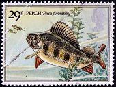 UNITED KINGDOM - CIRCA 1982 : A Stamp printed in Great Britain shows Perch Fish