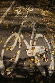 Bike road and leaves