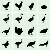 Poultry icons