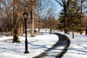 Lamp Post Lined Path
