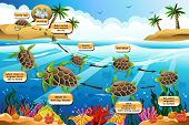 Life Cycle Of The Sea Turtle