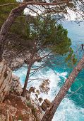 Coastal Landscape. Pine Trees Grow On The Rocks. Adriatic Sea, Montenegro
