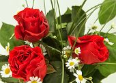 Three Red Roses With Green Leaves And Chamomile