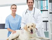 Portrait of confidence veterinarians with dog in clinic