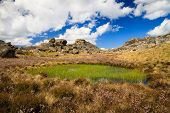 Mt Buffalo Wetland