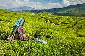 KERALA, INDIA - FEBRUARY 18, 2014: Unidentified Indian woman harvests tea leaves at tea plantation a