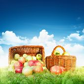 Ripe apples in a basket against a blue sky with clouds