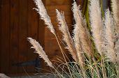 Bbamboo Grass
