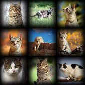 Cats Images Collection