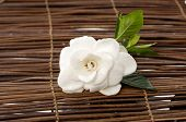 stock photo of gardenia  - Set of white gardenia bamboo mat - JPG