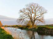 Bridgwater and Taunton Canal Somerset England UK
