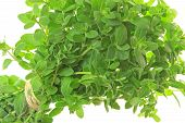 stock photo of origanum majorana  - Marjoram  - JPG