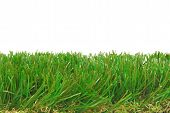 grass artificial isolated border