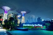 SINGAPORE - JAN 01, 2014: Gardens by the Bay or SuperTree Grove in Singapore. Night view of famous t