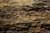 foto of decomposition  - macro image of dry rotted wood for a textured background - JPG