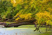 Autumn scene on swamp in forest