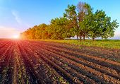 Border of ploughed agricultural field on sunset background