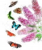 stock photo of butterfly-bush  - Watercolor Digital Painting Of Buddleja  - JPG