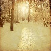 Sunset in winter forest.Old style photo.