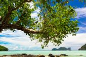 Exotic Paradise Branches Overhanging