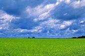 Midwest Soybean Field