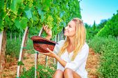 Happy girl on grape field, woman gardener sitting on the ground and picking grape bunches into the hat, organic food, enjoying great harvest, wine making
