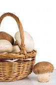 White And Brown Mushrooms In A Wicker Basket