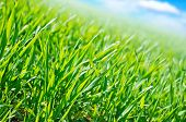 stock photo of spring-weather  - green grass in spring field - JPG
