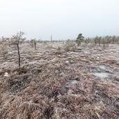image of frostbite  - snowy landscape in frosty winter bog in country side - JPG
