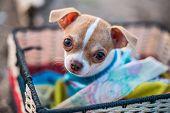 foto of sad eyes  - the little dog looks sad and cute eyes - JPG