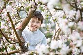 Cute little boy in blooming apple garden