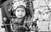 Adorable Baby Boy In A Stroller