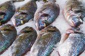Gilthead (sparus Aurata) On Ice In Fish Market