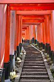 image of inari  - Kyoto Japan  - JPG