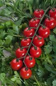 Cherry Tomato With Green Parsel