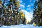 Green pine trees and the ski path on blue cloudy sky background