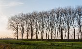 Row Of Leafless Trees In Low Afternoon Sunlight