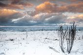 Winter Coastal Landscape With Dry Grass