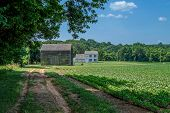 picture of battlefield  - A dirt road leads to this old homestead in Monmouth Battlefield State Park in Freehold NJ - JPG