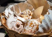 Sea Shells In A Basket