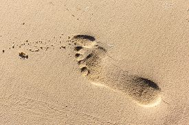 picture of human toe  - human barefoot footprints on the sand of a tropical beach - JPG