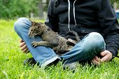 foto of lap  - cat sits on the man - JPG