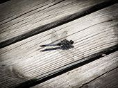 picture of dragonflies  - Beautiful large dragonfly on a background of old boards - JPG