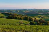 picture of butt  - Farmland in early morning Steptoe Butte State Park Oakesdale Washington - JPG