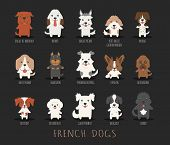 picture of bloodhound  - Set of french dogs eps10 vector format - JPG
