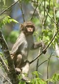 stock photo of tarzan  - (Wild Florida Monkey) Thank you very much for looking Silver River Florida
