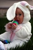 image of easter eggs bunny  - Little boy dressed up as the easter bunny - JPG