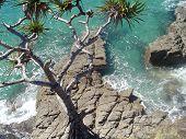 Ocean At Noosa