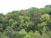 Hillside Of Autumn Colors
