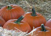 Pumpkins Nestled In Hay